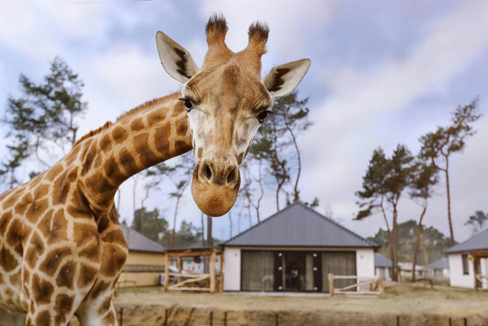 5-daagse Safari Resort Beekse Bergen mei en september 2021