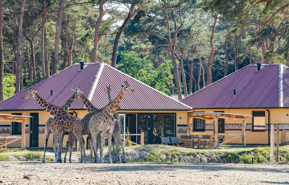 5-daagse Safari Resort Beekse Bergen 2020